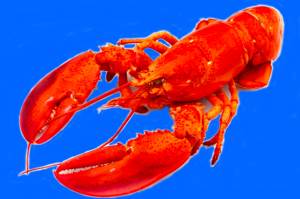 are lobsters deafness